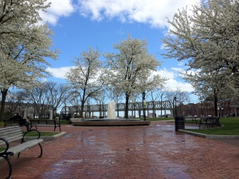 Spring time in Christopher Columbus Park - March 2012 by Lauren Sandonato