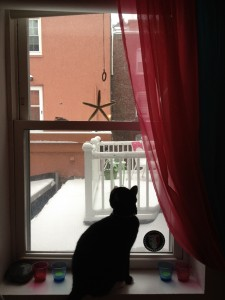 Cat Fascinated by Snow on North End Roofdeck by Lauren Sandonato