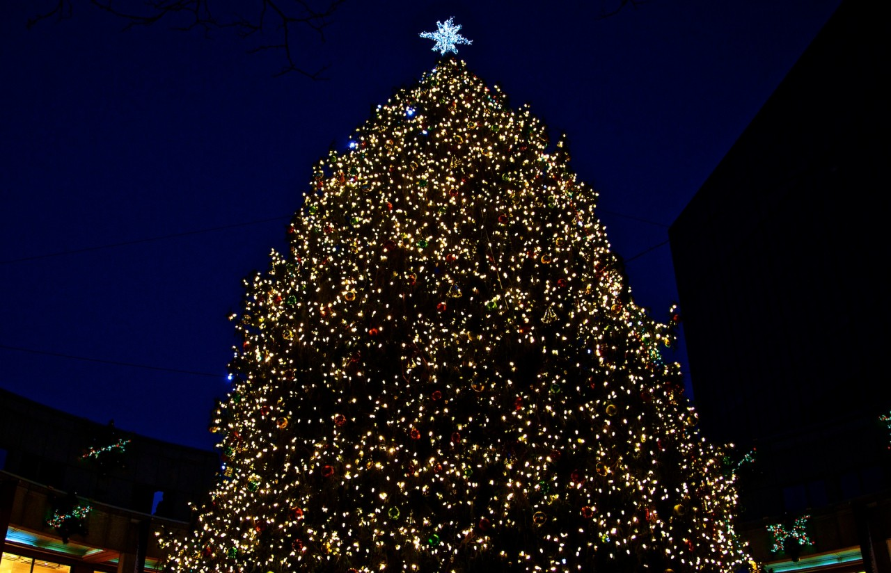 2012-11   Faneuil Hall Tree and Blink 18