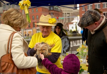 Even the dogs love Daffodil Day