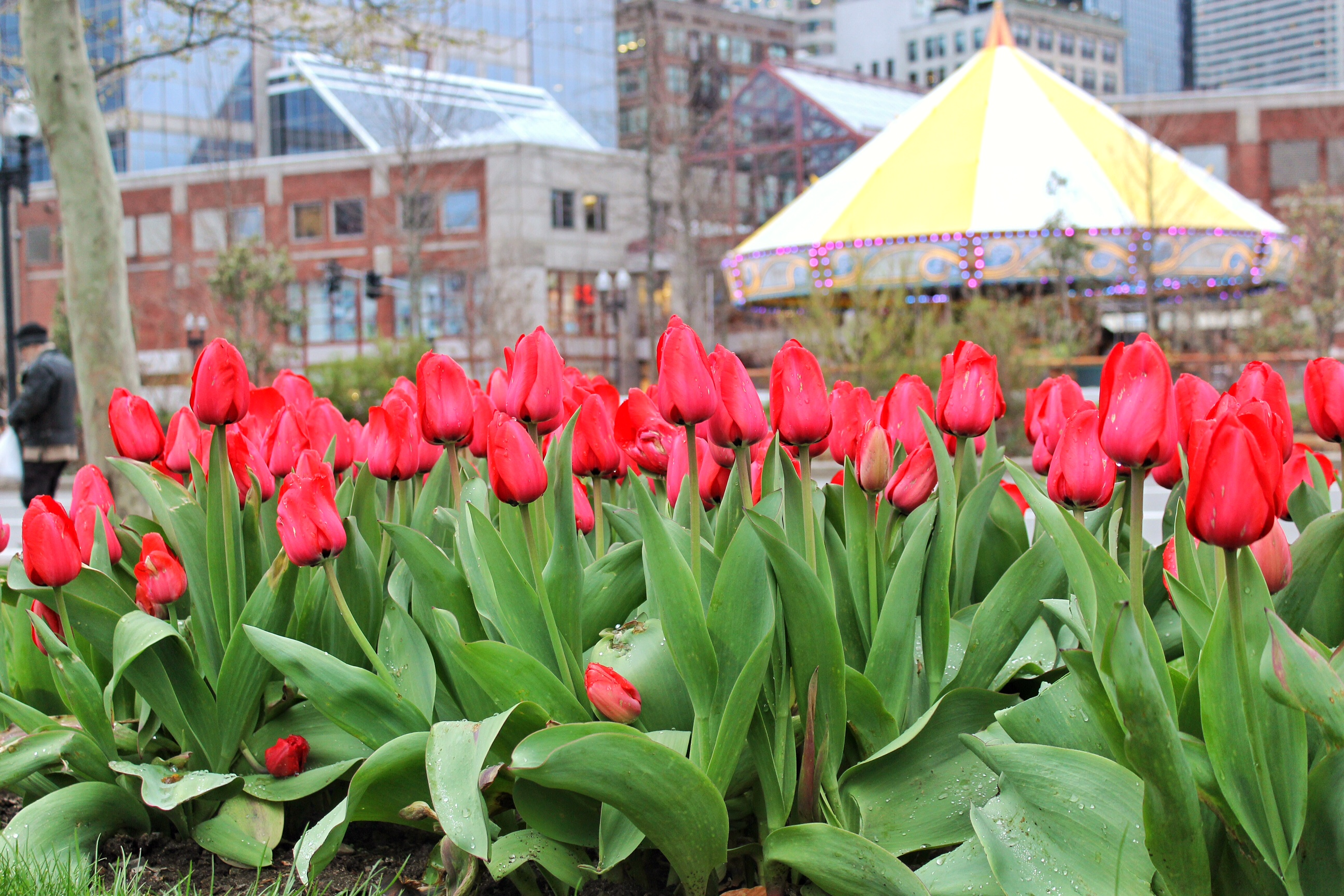 Spring is in full swing? Photo by Bob Somerville.